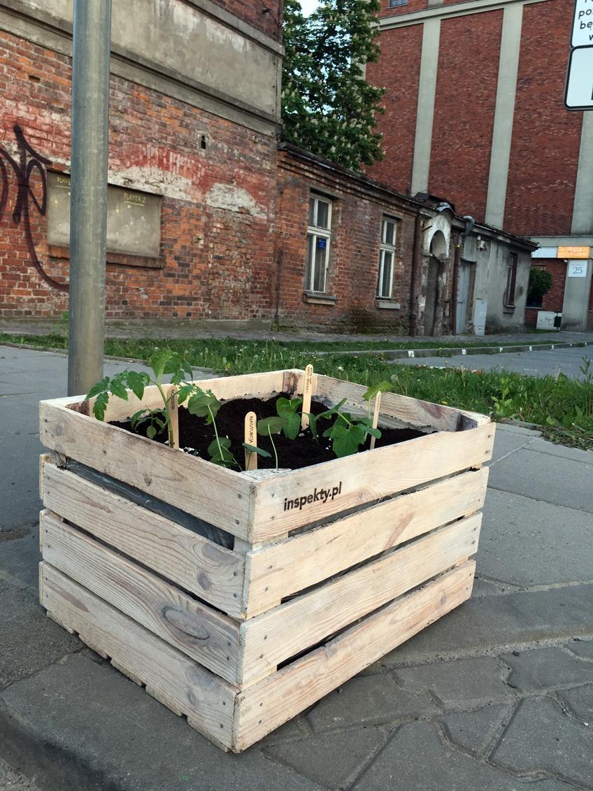 Skrzynie na rośliny, jak stowrzyć recyklingowe doniczki