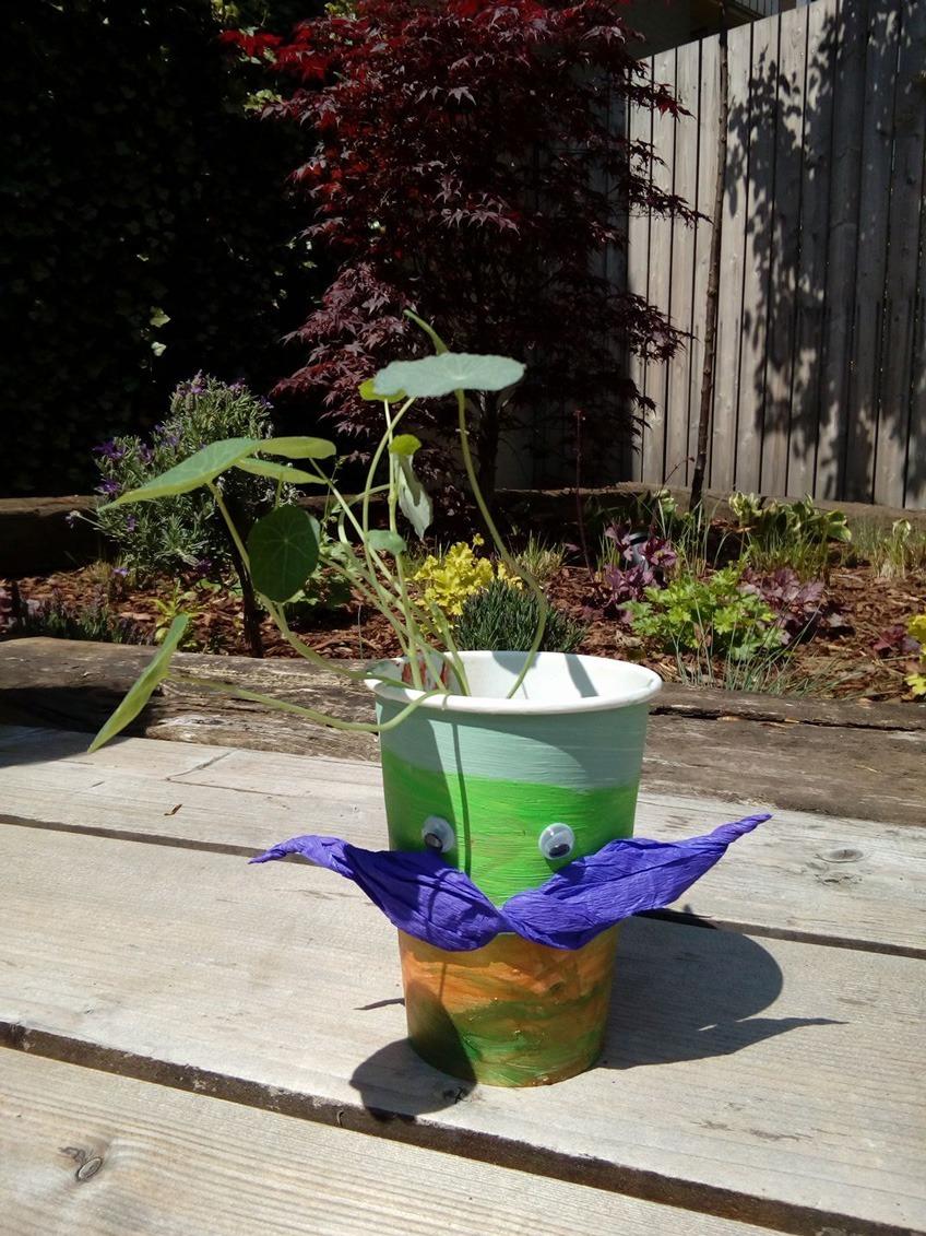 Doniczka w kubku po kawie, warsztaty roślinne i recyklingu