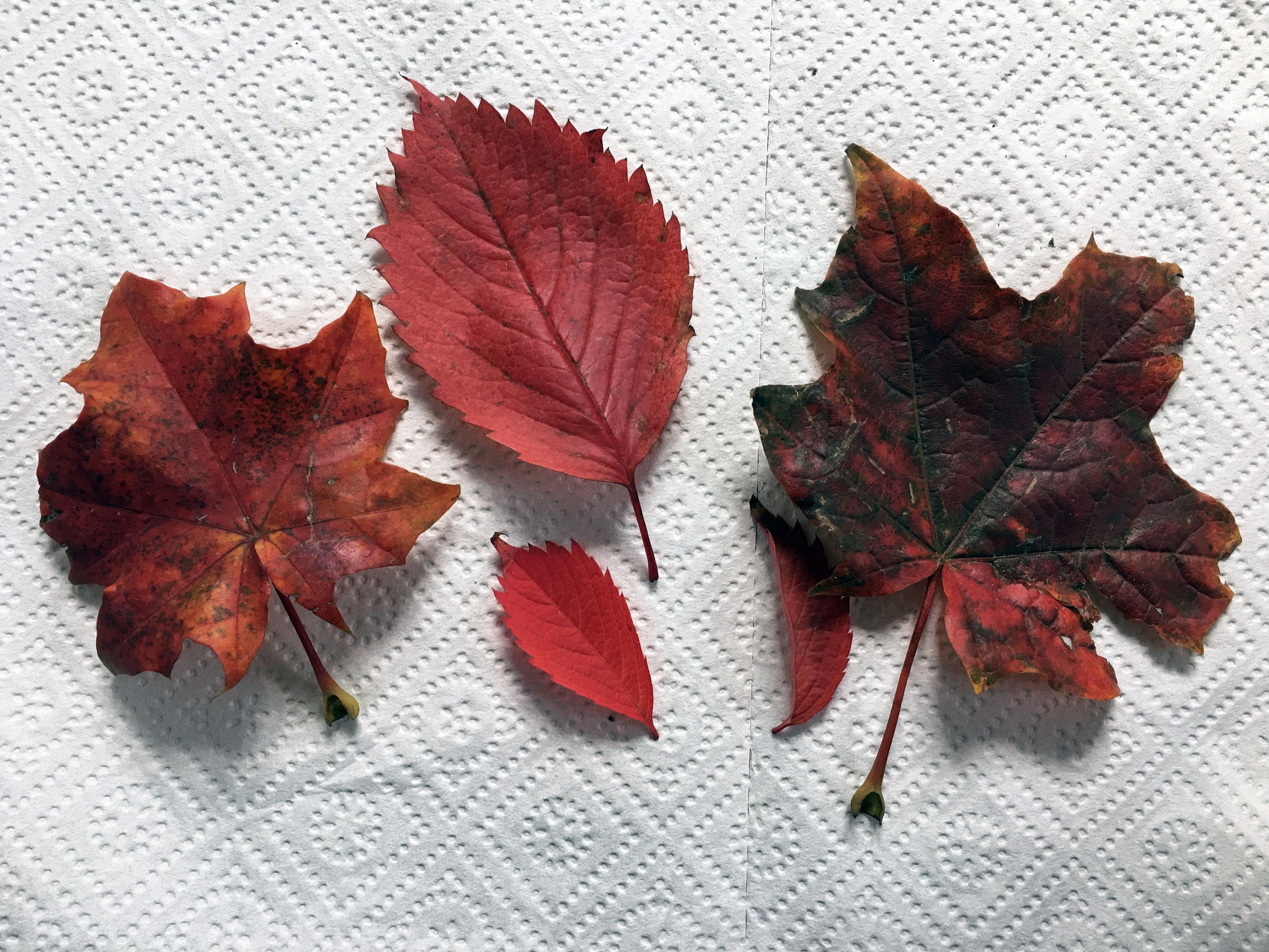 Dary jesieni, warsztaty dla dzieci