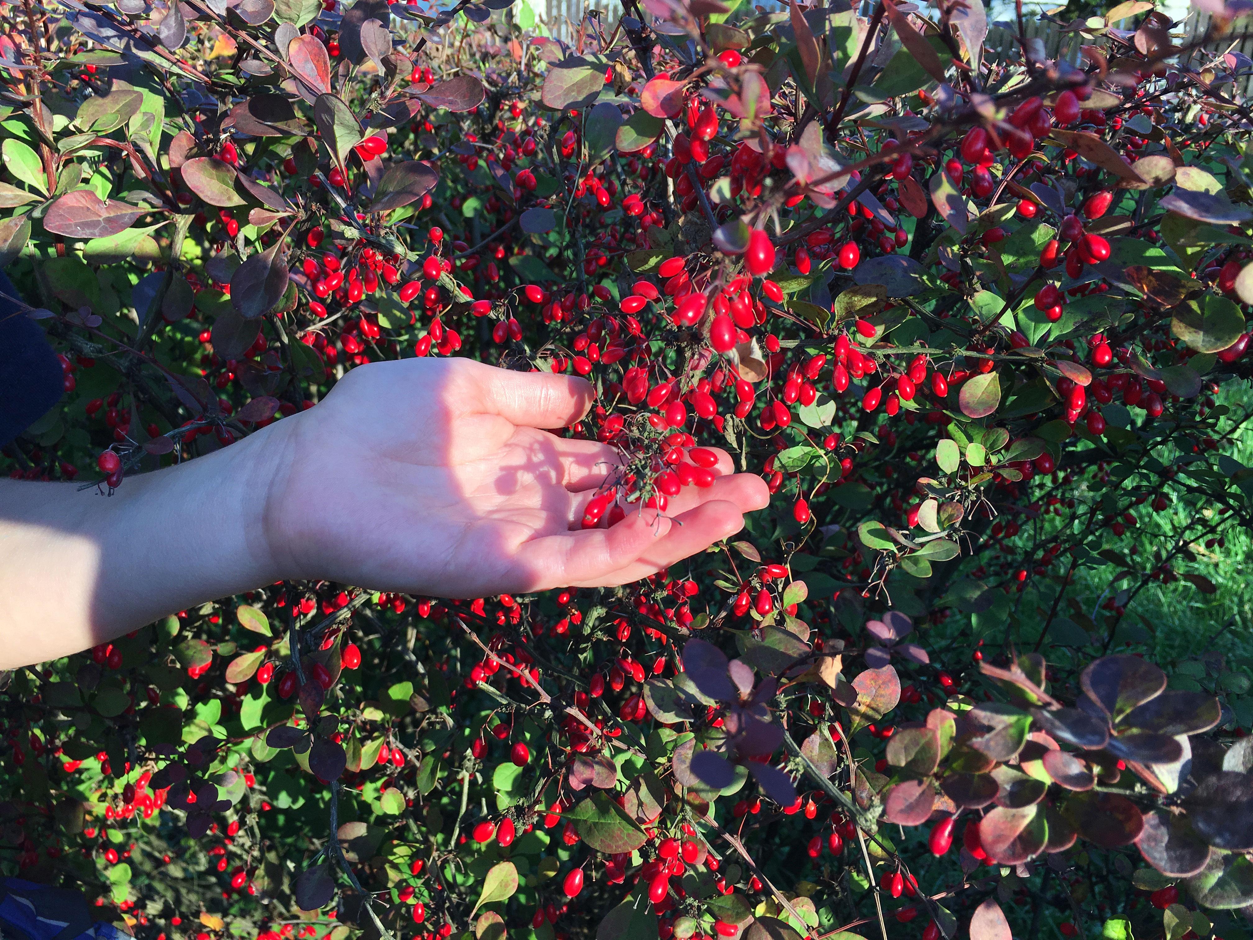 Plony jesieni, warsztaty dla dzieci