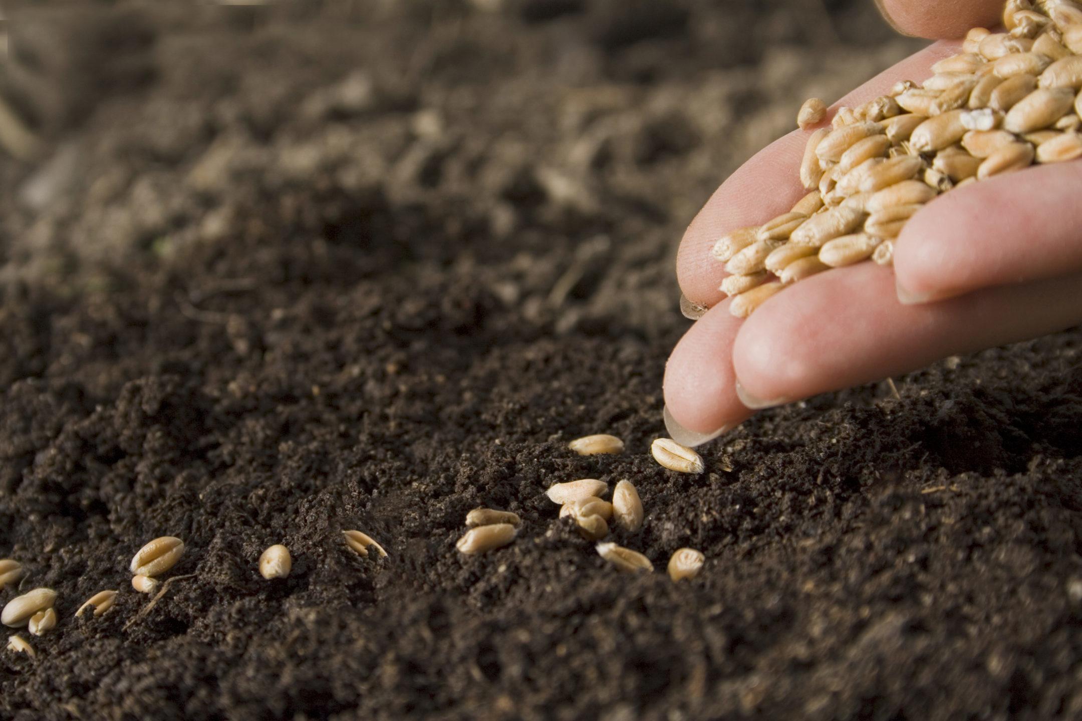 przechowywanie nasion