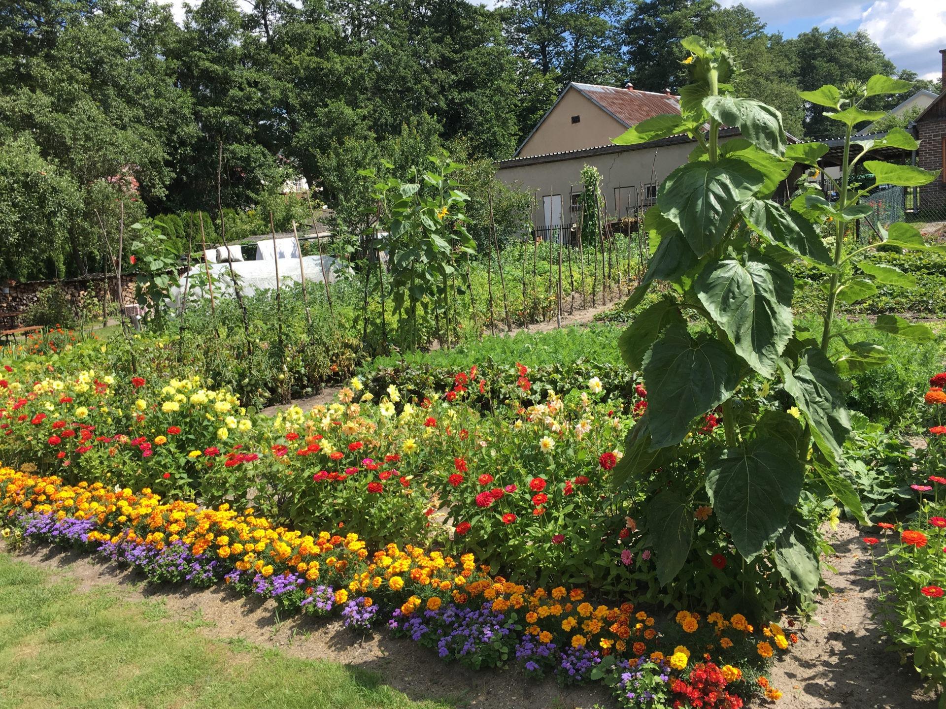 ogrod spoleczny