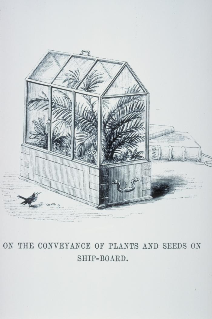 ogrody w szkle - terrarium doktora Warda