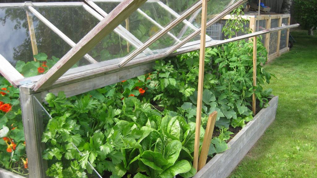 inspekt hodowla warzyw ogród