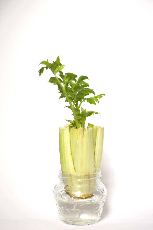 hodowanie warzyw z resztek w domu