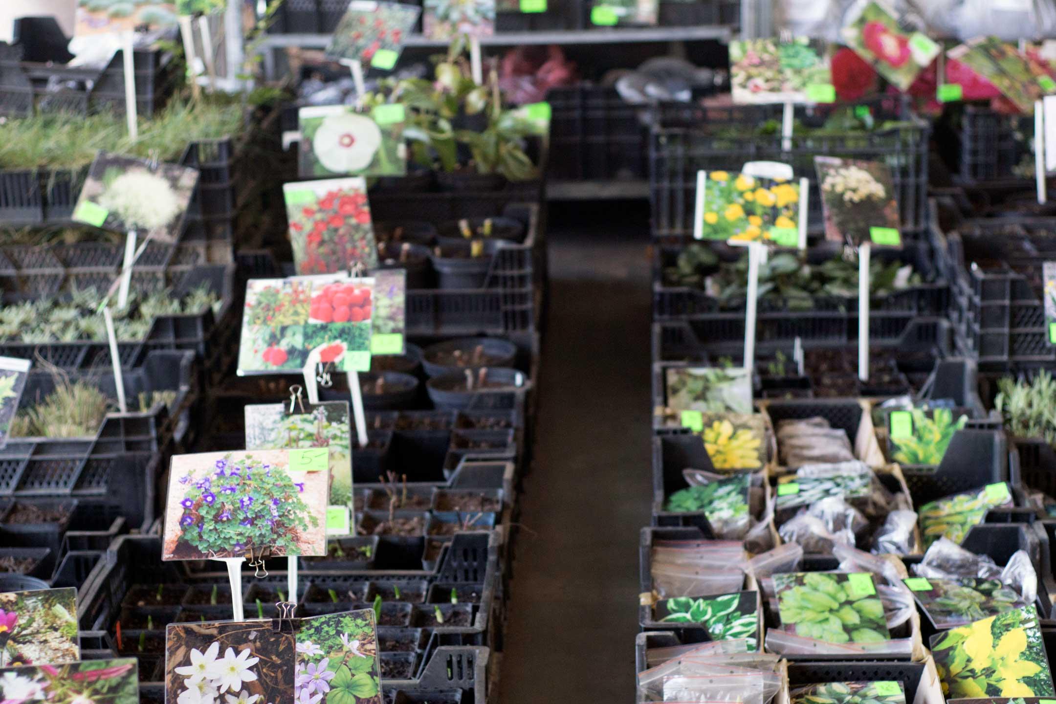 sadzonki kiermasz, Targi Gardenia