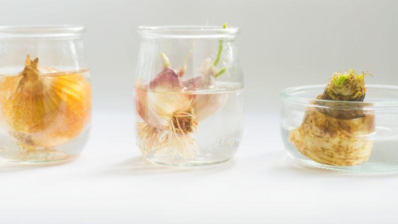 warzywa z resztek uprawa w domu