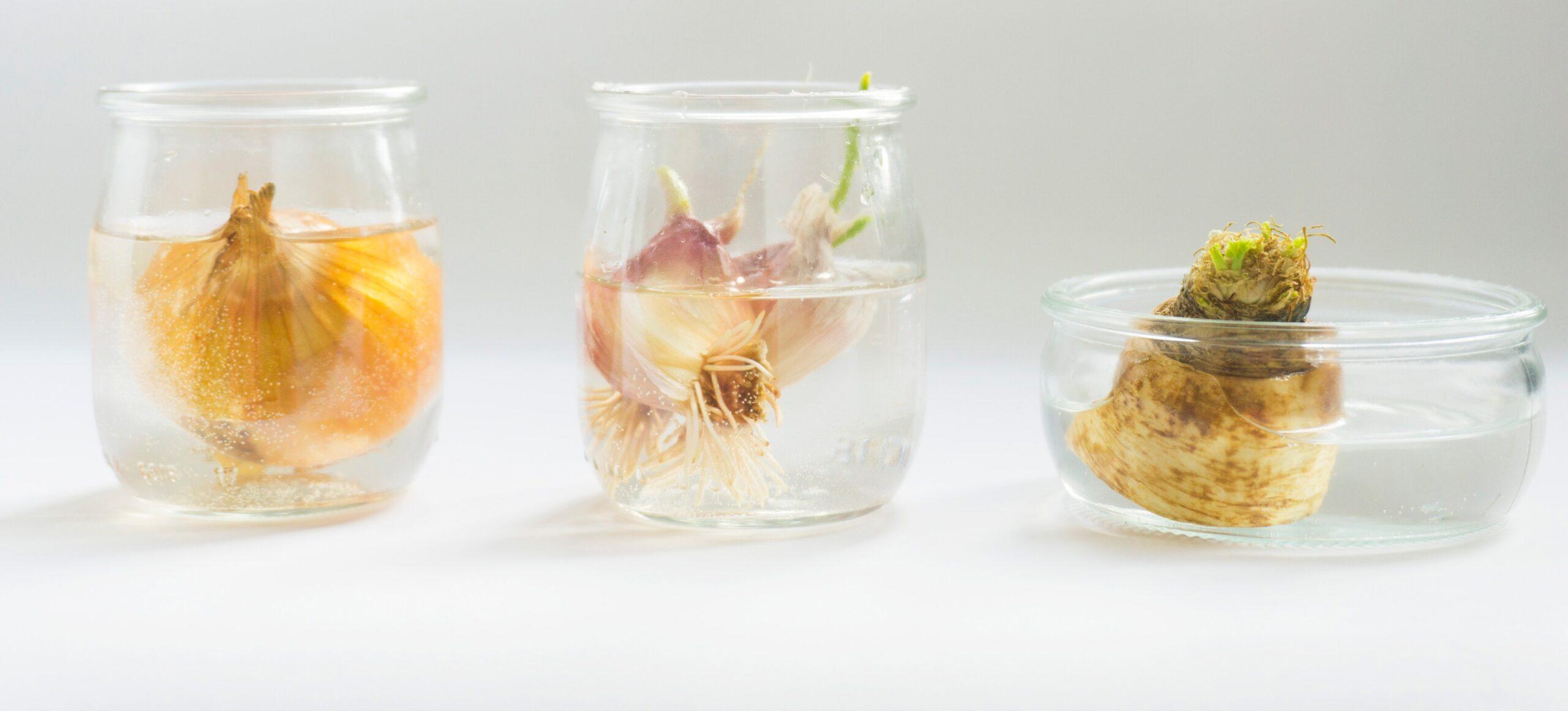 Warzywne zero waste, czyli warzywa z resztek