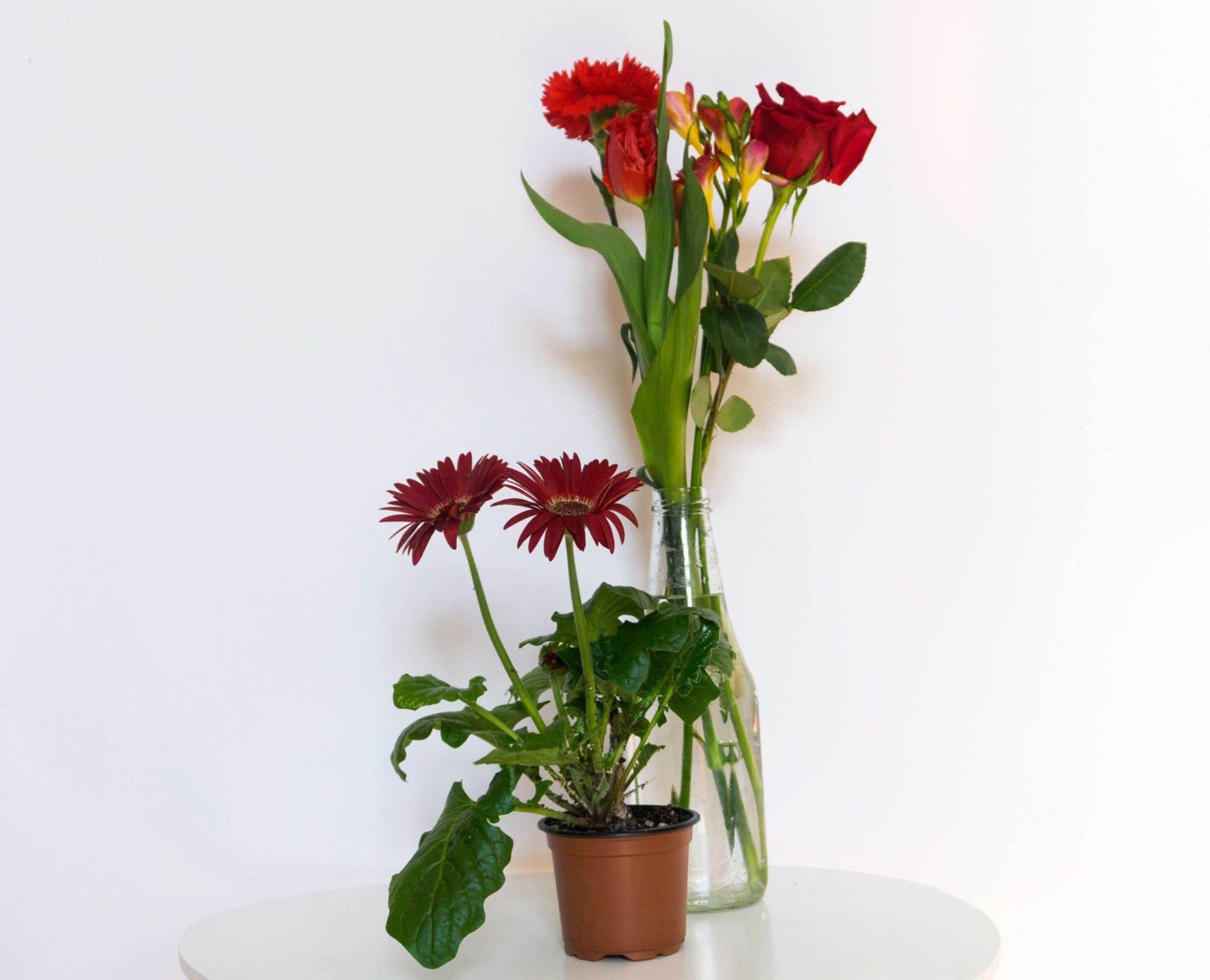 Top 5 kwiatów na Dzień Kobiet dla miejskich ogrodniczek!