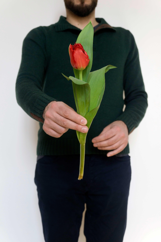 czerwony tulipan dzień kobiet