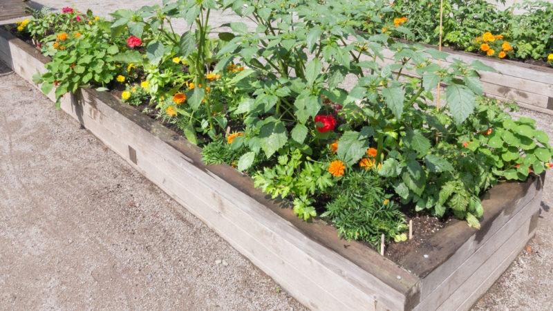 ogród warzywny w mieście