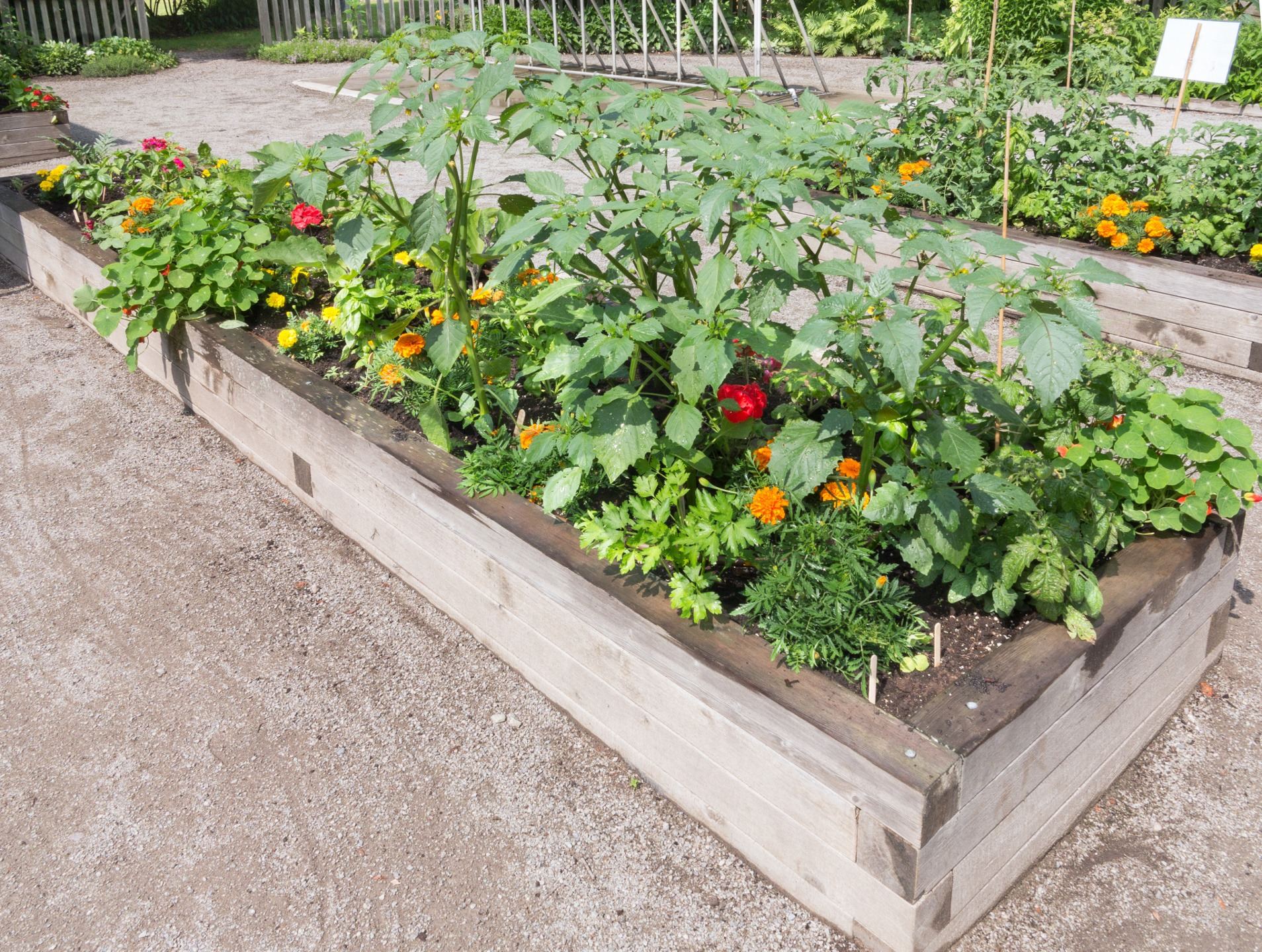 Gdzie w mieście uprawiać warzywa?