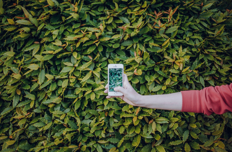 zielone aplikacje