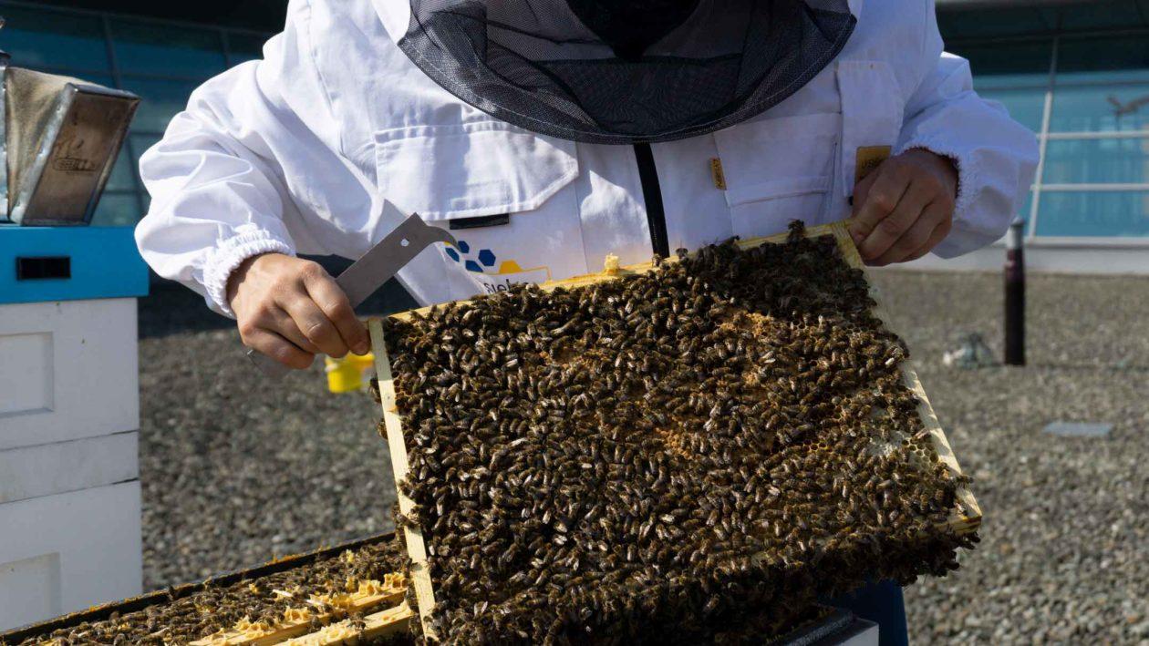 pszczoly na dachu pasieka krakow