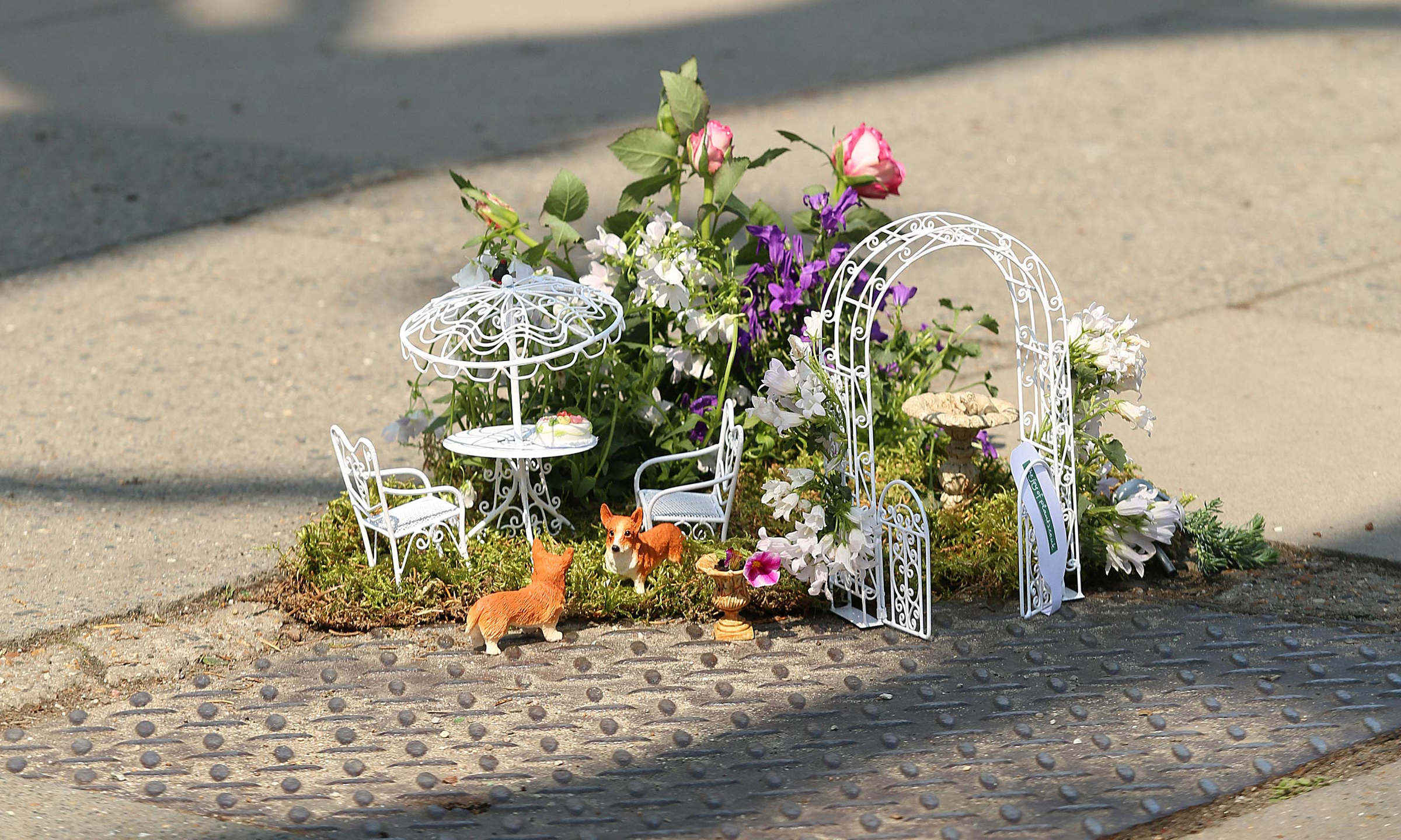 partyzantka ogrodnicza - The Pothole Gardener
