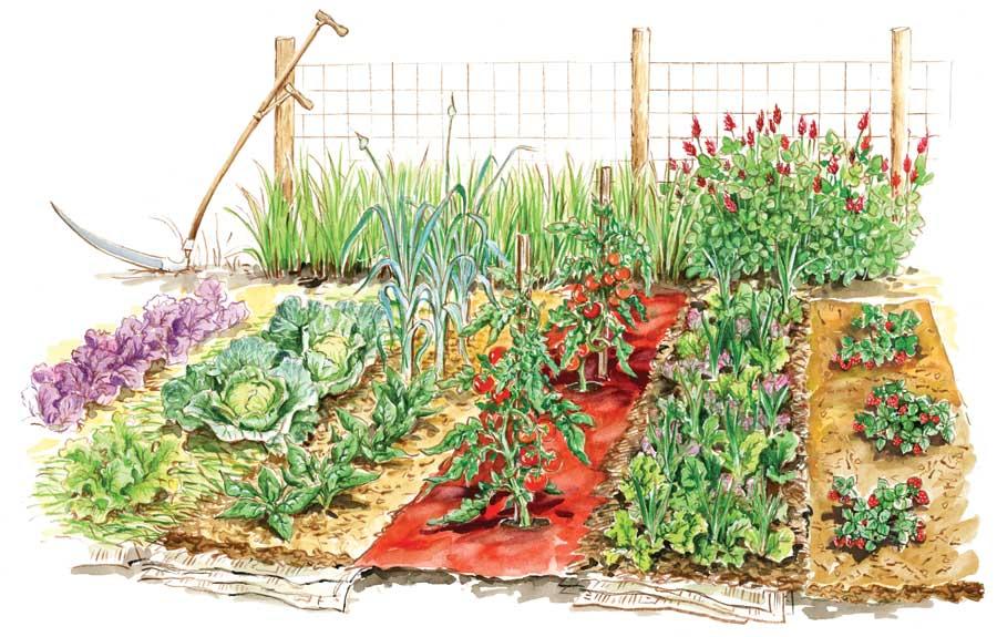 miejskie ogrodnictwo