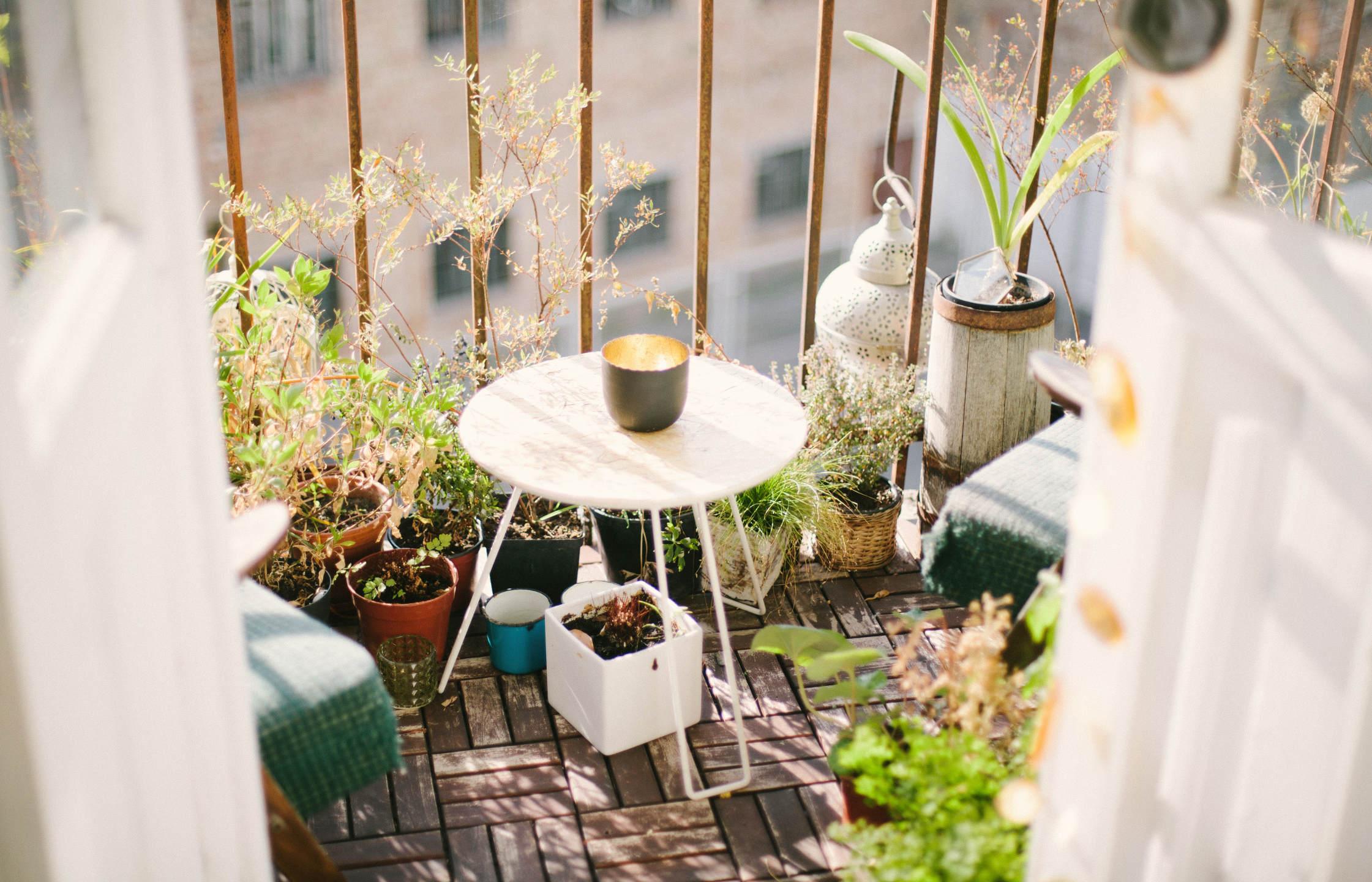 O czym pamiętać uprawiając warzywa na balkonie?
