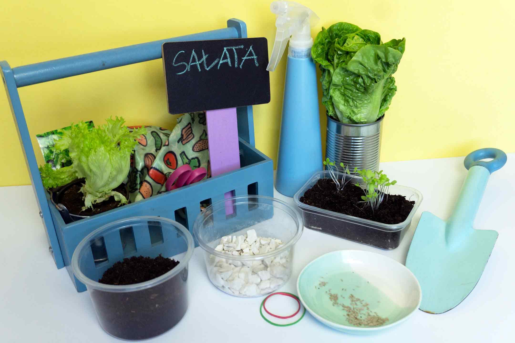 jak wyhodować sałatę w domu