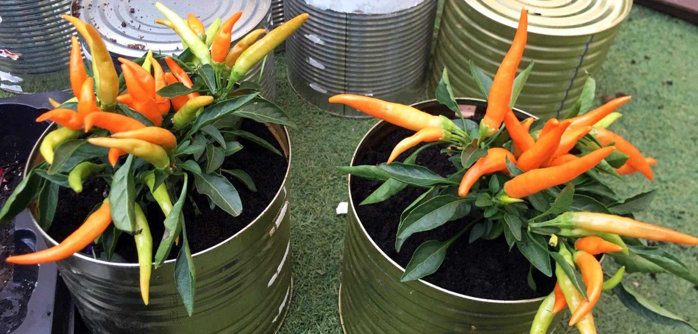 ogródek zero waste