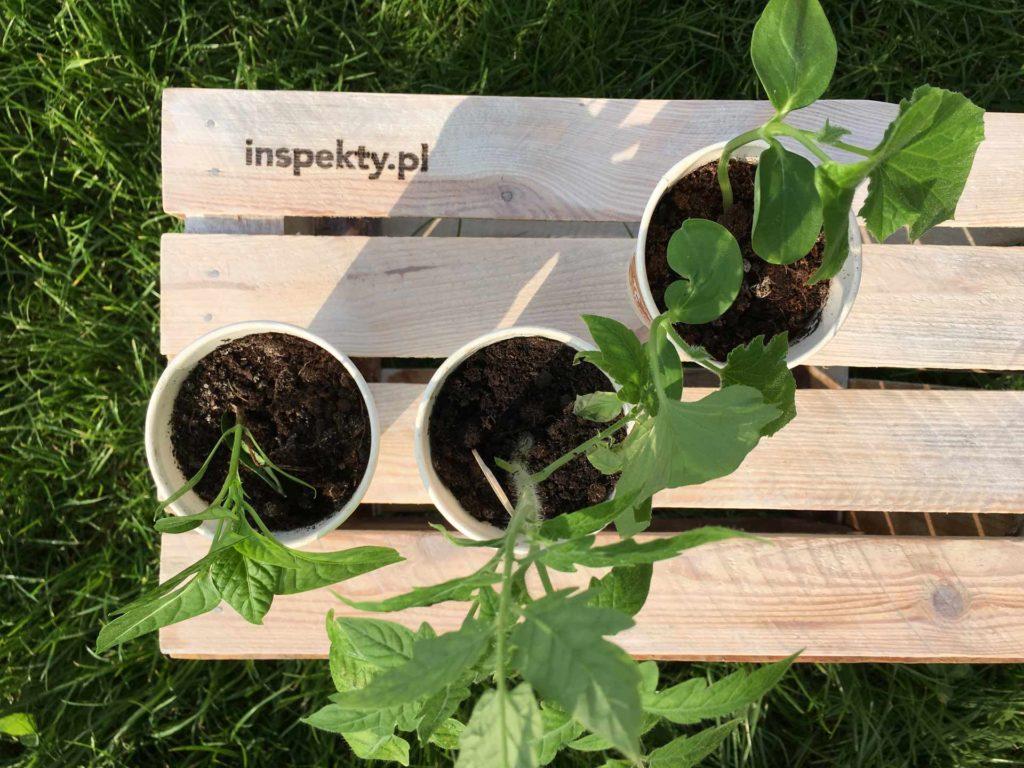 zero waste w ogrodzie _ skrzynka na warzywa