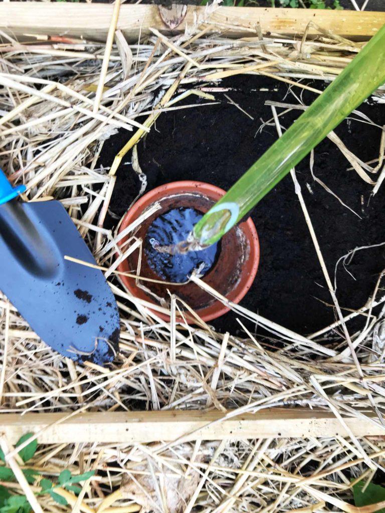 zero waste w ogrodzie _podlewanie_ ceramiczne doniczki