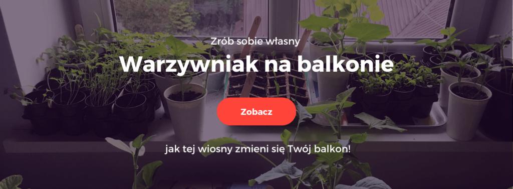 warzywniak na balkonie_kurs