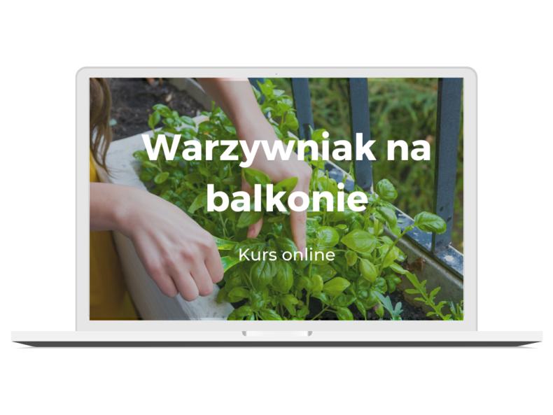 Warzywniak na balkonie _kurs online