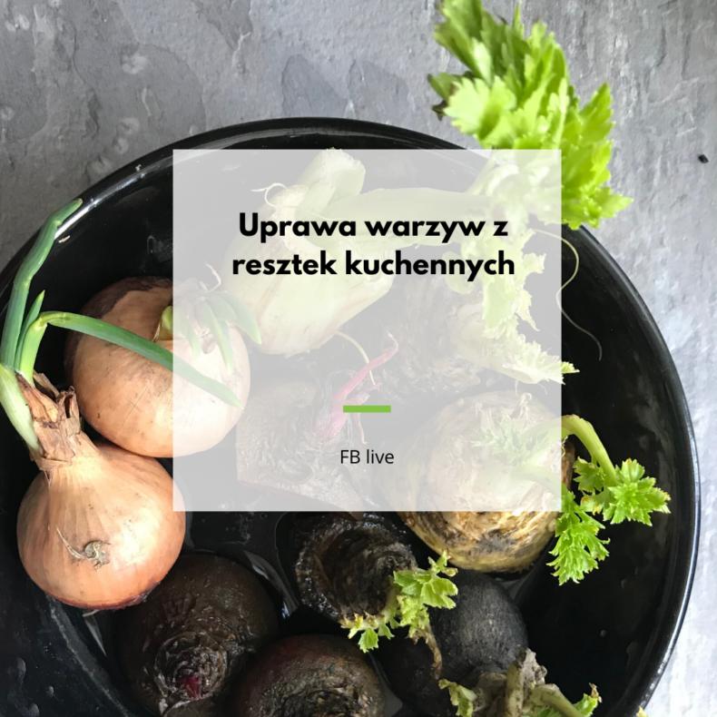 uprawa warzyw z resztek kuchennych