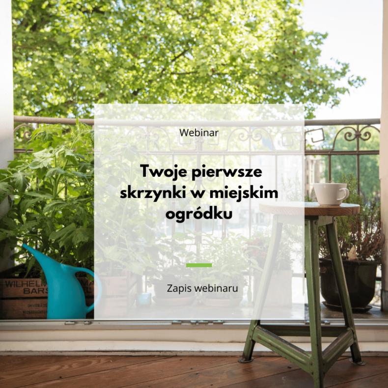 warzywnik na balkonie webinar