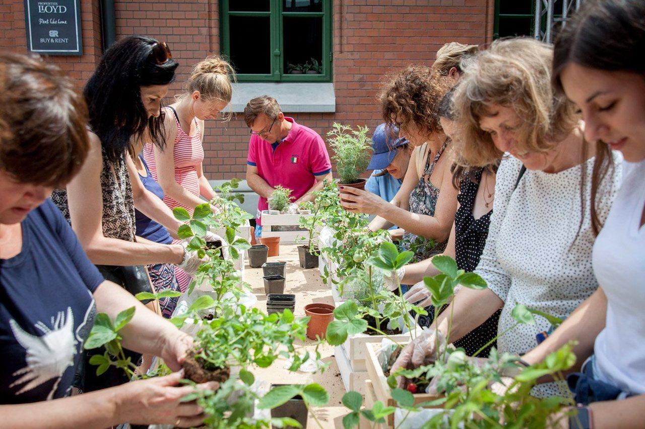 warzywniak na balkonie kurs online